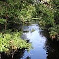 Hillsborough River by Alicia Roman
