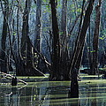 Hillsborough Swamp Autumn 32 by Carol Kay
