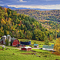 Hillside Acres Farm by Priscilla Burgers