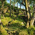 Hillside Forest by Brian Jannsen