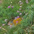 Hillside Of Wildflowers by Nancy L Marshall