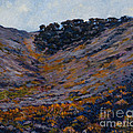 Hillside Sage by Betsee  Talavera