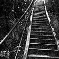 Hillside Stairs by Sean Kirkpatrick