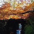Hillwood Mansion Fall Garden by Lois  Ivancin Tavaf