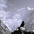 Himalayan Freedom by Shaun Higson