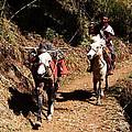 Himalayan Horseman - Nepal by Aidan Moran