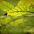 Hint Of Autumn by Judi Bagwell