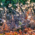 Hint Of Fall Colors 15813 by Jerry Sodorff