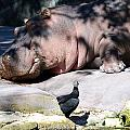 Hippo And Friend by Linda Kerkau
