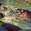 Hippopotamus Fight In River. Serengeti. Tanzania by Michal Bednarek