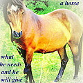 Care About A Horse And He Will Give You His Heart In Return  by Hilde Widerberg
