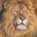 His Majesty - Detail by Lucie Bilodeau