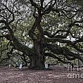 Historic Angel Oak by Dale Powell