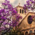 Historic Sierra Madre Congregational Church Among The Purple Jacaranda Trees  by Jerry Cowart