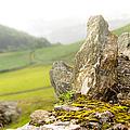 History And Nature. Wicklow. Ireland by Jenny Rainbow