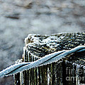 Hoar Frost At Sun Up by Roe Rader