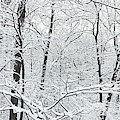Hoar Frost Covered Trees In Forest by Panoramic Images