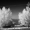 hoar frost covered trees on street in small rural village of Forget Saskatchewan Canada by Joe Fox