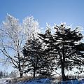 Hoar Frost by Larry Ricker