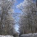 Hoar Frost On Campground Road by LeeAnn McLaneGoetz McLaneGoetzStudioLLCcom