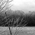 Hoar Frost On The Wood by J McCombie