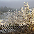 Hoarfrost In Winter by Matthias Hauser