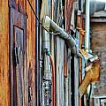 Hoboken After Sandy by PatriZio M Busnel