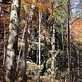 Hocking Hills Trees by Karen Adams
