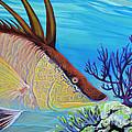 Hogfish by Paola Correa de Albury