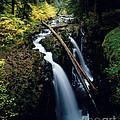 90122 Hoh Rainforest by Erik Poppke