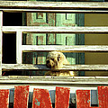 Hoi An Dog 01 by Rick Piper Photography