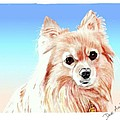 Hoku - A Former Shelter Sweetie by Dave Anderson