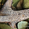 Holey Driftwood by Barbara Griffin
