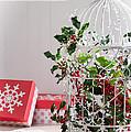 Holiday Birdcage by Amanda Elwell