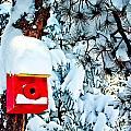 Holiday Birdhouse by Teri Virbickis