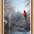 Holiday Season 2013 by Teresa Schomig