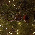 Holiday Sparkle by Daniel Jakus