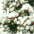 Holly Tree With Snow by Suzanne Powers
