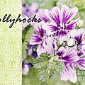 Hollyhocks by Pam  Holdsworth