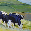Holstein Friesian Cows by Mike Jory