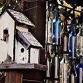Home Amongst The Vines by Amy Medina