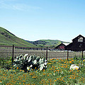 Home Home On The Range by Barbara Snyder