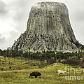 Home On The Range At Devils Tower by Teresa A and Preston S Cole Photography
