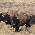 Home On The Range by Fran Riley