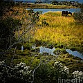 Home On The Range by Robert McCubbin