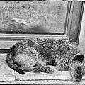 Homeless Dog by Jan Tyler