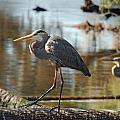Homosassa Springs Waterfowl 8 by Jeff Brunton