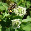Honey And Clover by Caryl J Bohn
