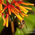 Honey Bee 7 by Photos By  Cassandra