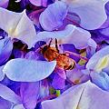 Honey Bee Cling by Lois    Rivera